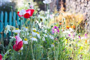 Flowers in september.
