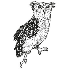 Vector handpicked hand-drawn ilustration with Owl