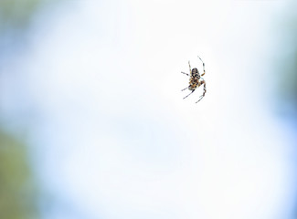 Spider in air