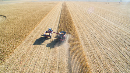 Aerial View of Agriculture Combine Corn Harvest