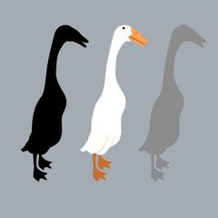 Peking duck style vector illustration Flat set