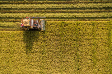 Harvester machine to harvest rice field working from aerial view in Thailand.