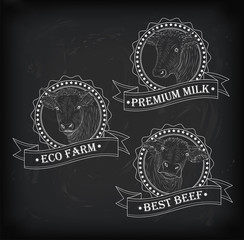 Cow, calf, bull cute muzzle face set collection variation sticker icon label tag badge symbol text eco farm beef tape. Vector beautiful square nice chalkboard sign outline drawn chalk illustration