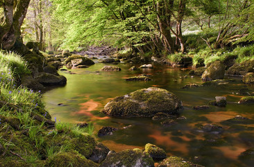 Foto op Plexiglas Rivier Beautiful glencree river flowing through magical landscape