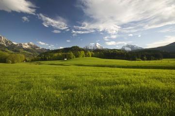Alpine Meadow, Watzmann Mountain, Berchtesgadener Land, Bavaria, Germany