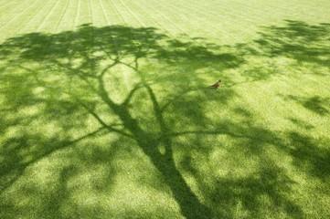 Robin On A Tree's Shadow