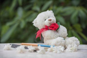 Teddy bear and diary for a memoir .