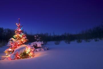 Christmas Tree Outdoors