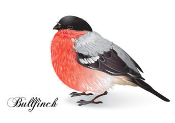 Christmas bullfinch bird