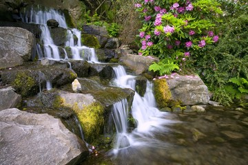 Rhododendrons Beside Waterfall, Crystal Springs Garden, Oregon, Usa