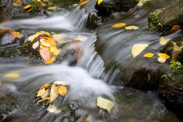 Fall Leaves In Rushing Water