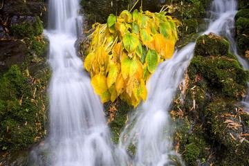 Fall Colors In Crystal Springs Falls, Oregon, Usa