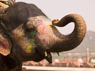 Decorated elephant, Jaipur, India