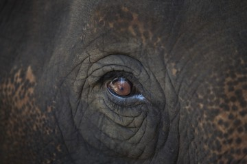 Closeup Of An Animal's Eye