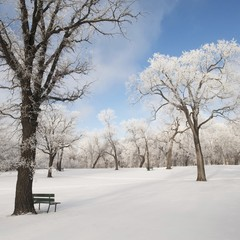 Winnipeg, Manitoba, Canada; Snow On The Ground And Trees In A Park