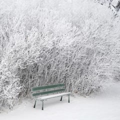 Winnipeg, Manitoba, Canada; Frost And Snow Covering A Park Bench, Ground And Trees