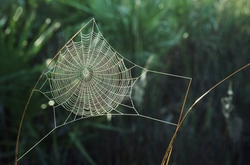 Orb Web Covered With Dew, New Mexico, Usa