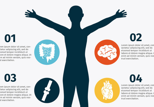 Human Body Infographic and Anatomical Icon Set 2
