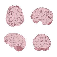 Human brain four views. Top, frontal, side, three-quarter. Flat brains vector icons