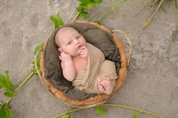 Newborn Baby Boy in Basket on Beach