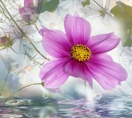 Beautiful water flower.Nature poster