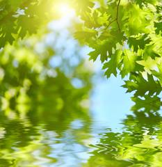 Fototapete - Fresh green leaves reflecting in water background. Sun shining through, water reflection