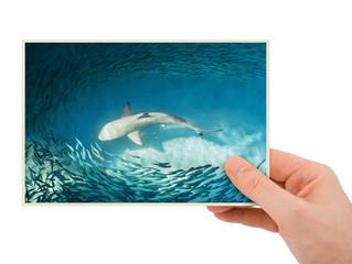 Hand and shark image (my photo)
