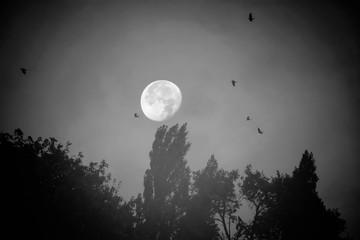 Vollmond über dunkler Wald Silhouette und schwarzen Raben
