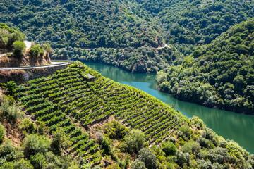 Vineyards along Sil River, Ribeira Sacra, Lugo (Spain)