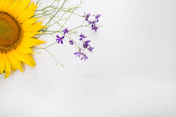 beautiful sunflowers isolated on white
