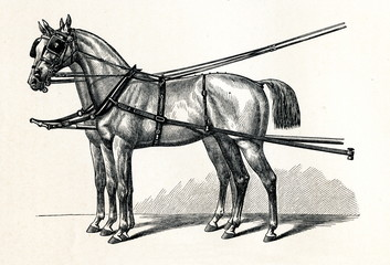 Horse harnessing (Luxuskumtgeschirr) (from Meyers Lexikon, 1895, 7/432/433)