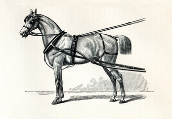 Horse harnessing (Selletgeschirr) (from Meyers Lexikon, 1895, 7/432/433)
