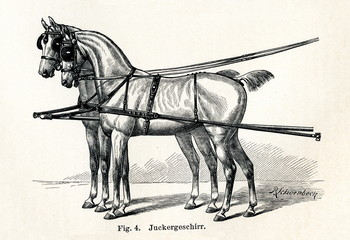 Horse harnessing (Juckergeschirr) (from Meyers Lexikon, 1895, 7/432/433)