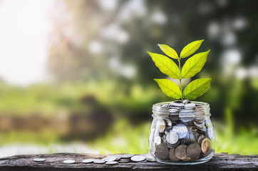concept money growing and small tree in jar