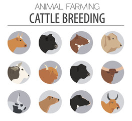 Cattle breeding. Cow, bulls breed icon set. Flat design