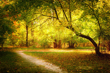 Sunny day in outdoor park with colorful autumn trees and pathway. Amazing bright colors of autumn nature landscape
