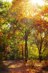 Sunny day in outdoor park with colorful autumn trees. Amazing bright colors of nature landscape