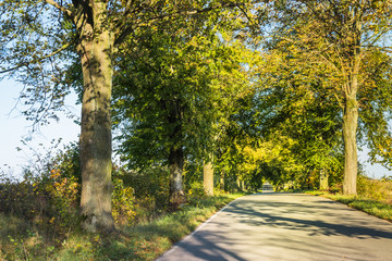Avenue of trees in autumn. Beautiful road. Background. Sunlight. Nature. Poland.