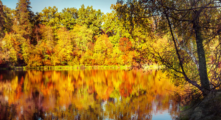 Sunny day in outdoor park with lake and colorful autumn trees reflection under blue sky. Amazing bright colors of autumn nature landscape