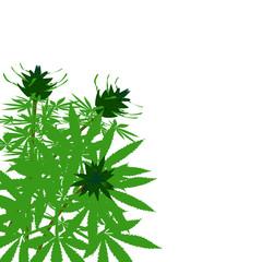 green bush of hemp