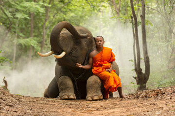 Monk with elephant in the forest .