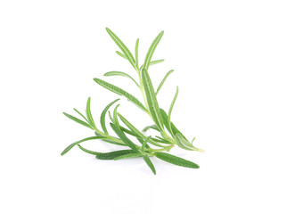 rosemary isolated on white background