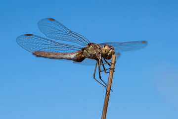 Close-up of a dragonfly