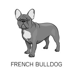 Brown French Bulldog vector illustration