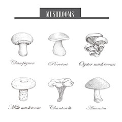 Set mushrooms sketch drawing illustration. vector eps10