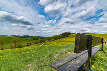 field of dandelion at sauerland, germany