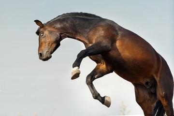 Horse funny jump against sky