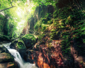 Indonesia wild jungles. Amazing mystery rainforest landscape with small waterfall flowing among tropical plants