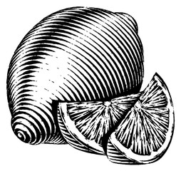 Engraved isolated illustration of a lemon