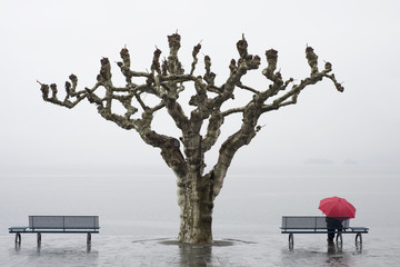 A tree and a person with a red umbrella at the water's edge;Ascona ticino switzerland